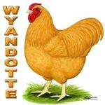 Buff Wyandotte Cock