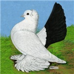 Russian Pigeon