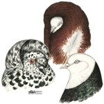 Three Pigeons2