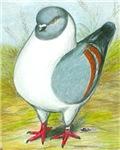Gazzi Modena Pigeon