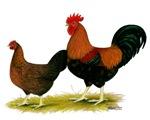 Welsummer Fowl