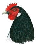 Lakenvelder Hen Head