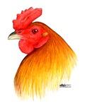 Gamecock Pea Comb