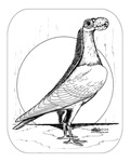 Carrier Pigeon 1978