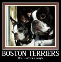 Double Boston