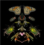 Insects of New York: Mandalas, collages and masks