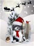 Black & White Shih Tzu Santa On A Winter Day