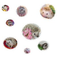 Hedgehog Cameos