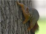 Amiable Tree Hugger