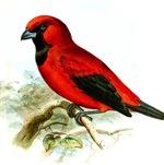 Vintage Illustration of a Bird