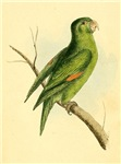 Pretty Green Parrot