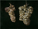 Vintage Painting of Grapes
