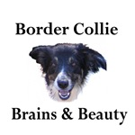Border Collie:Brains & Beauty