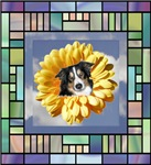 Border Collie Stained Glass