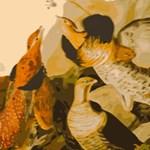 Audubon Ruffled Grouse Birds