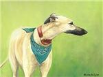 Greyhound in Scarf
