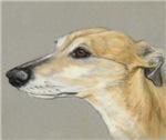 tan greyhound profile