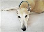 Tan greyhound pastel square