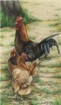 Rooster and 2 Hens