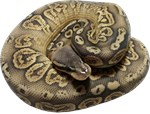 Paint / Sentinel ball python