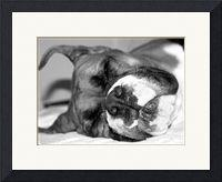 Boxer Prints, Posters and Calendars