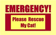 EMERGENCY DOOR & WINDOW STICKERS FOR CATS!