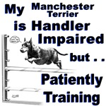 Manchester Terrier Agility