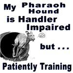 Pharaoh Hound Agility