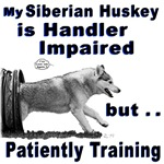 Siberian Huskey Agility