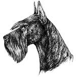 Giant Schnauzer Head Profile
