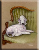 Bedlington-Her Royal Highness