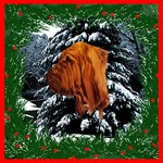 Christmas Bloodhound
