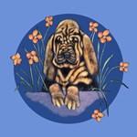 Wrinkled Bloodhound Puppy