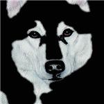 Malamute Black & White