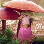 Toadstool Fairy Surprise