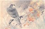 Japanese Hawk Print