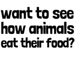 Want To See How Animals Eat Their Food