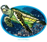 i love turtle's and the ocean