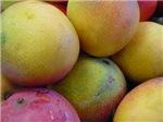 Mango Fruits close up