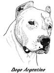 Dogo Argentino - 2 images