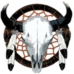 Buffalo skull dream catcher