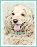 Cocker Spaniel-Multiple Illustrations