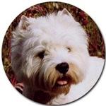 West Highland Terrier Westie