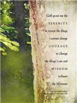 Serenity Prayer Sycamore Trunk