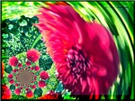 Pink Floral Swirl