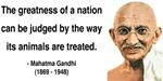Gandhi 10