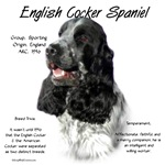 English Cocker Spaniel(parti/b&w)