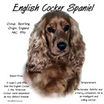 English Cocker Spaniel (liver)