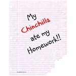Chinny Homework