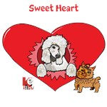 Sweet Heart Yorkie Poodle